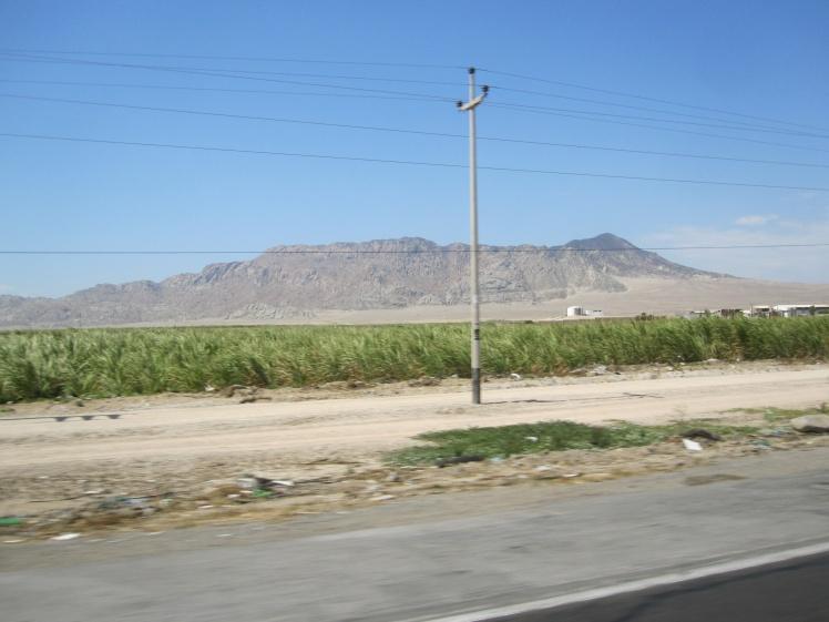 Cultivos de caña en el desierto peruano