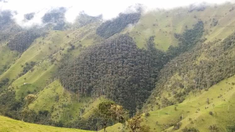 Bosques que luchan por no dejarse acabar...