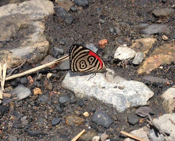Mariposa 89 - Foto de Javier Rugeles