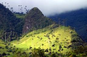 valle cocora 2